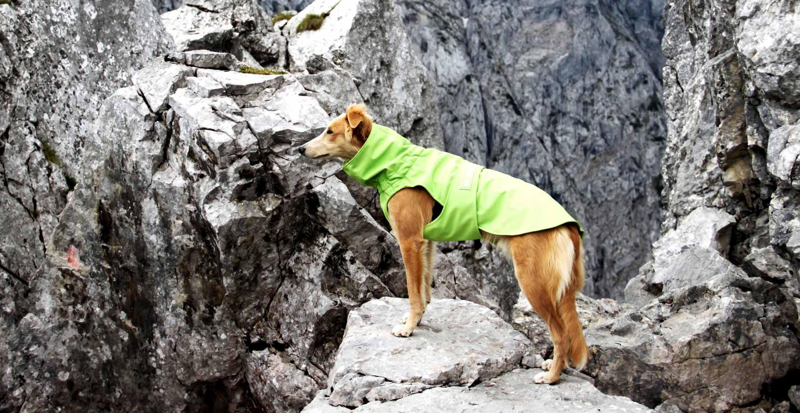 Hundemantel aus Softshell nähen lassen