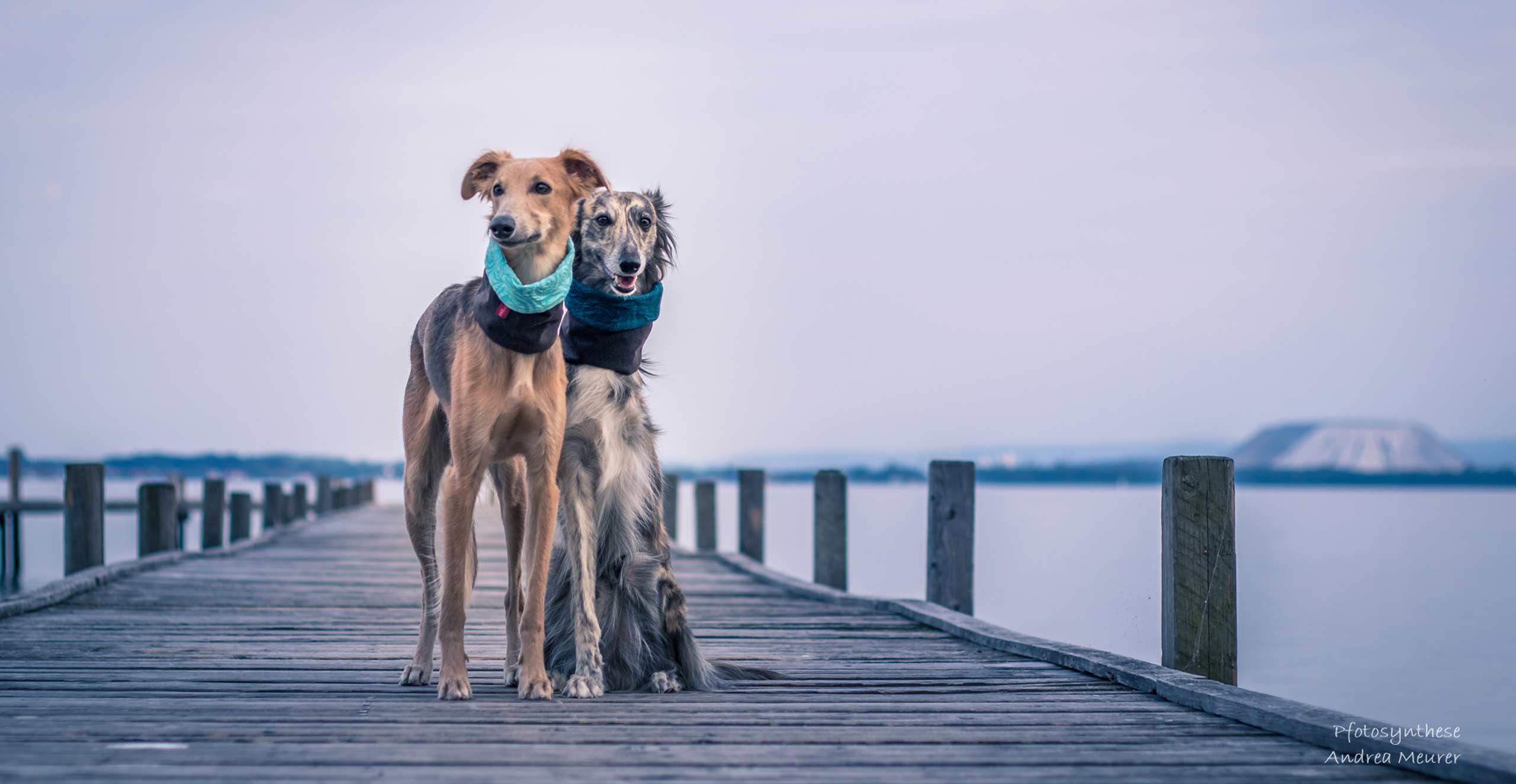 Hundeloops und Hundeschals von Waxwerke