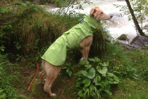 Softshell Regenmantel Hund