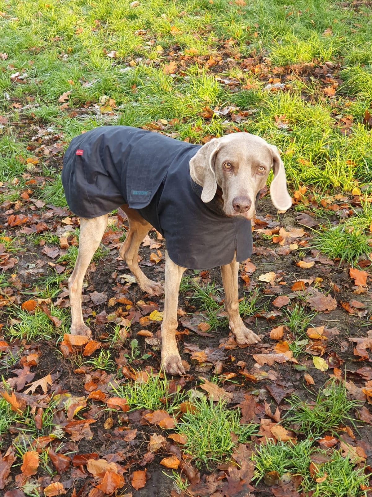 Ein Hundemantel aus Waxed Cotton hält im Herbst Kälte und Feuchtigkeit ab.