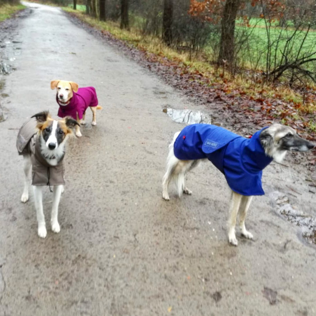 Hundefreunde Gassi in WAXWERKE